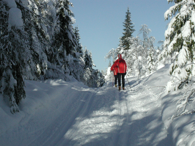 cross country skiing (from thinkstock)
