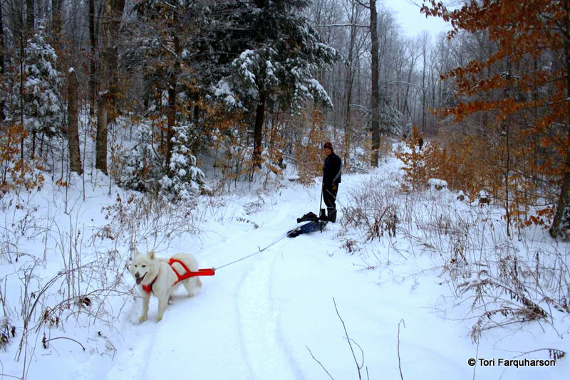 tobogganing with your dog