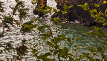 Sea Lion - Sleeping Giant Provincial Park