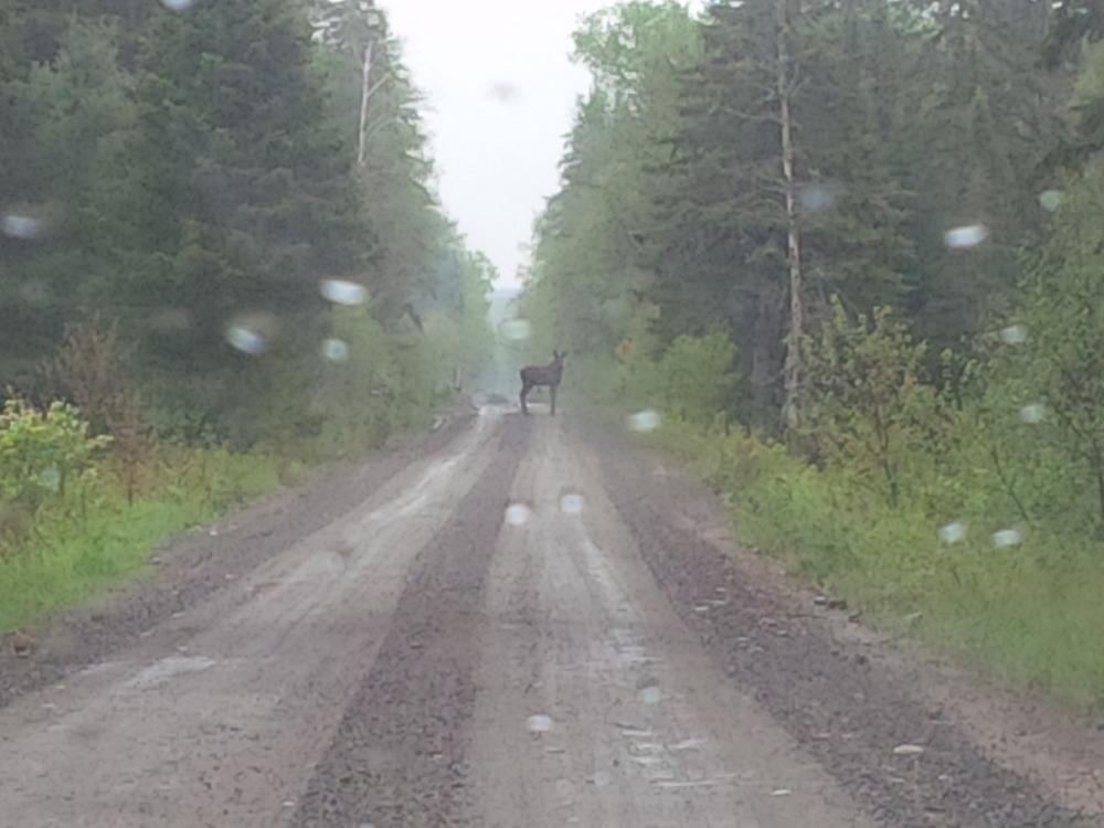 Logging road to Rain lake ranger cabin algonquin