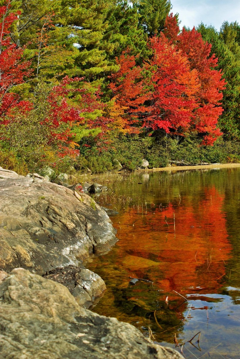 Fall colors at Grand Lake, Algonquin
