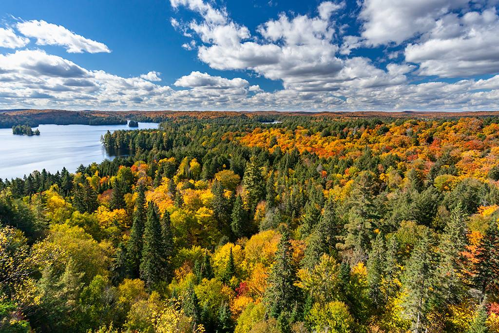 Fall colours at Track and Tower Trail, Algonquin