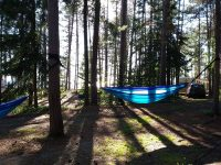 Sunlight filtering through the pine trees at Agawa Bay campground