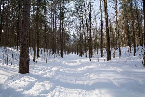Winter hiking - Glen Major Forest and Walker Woods