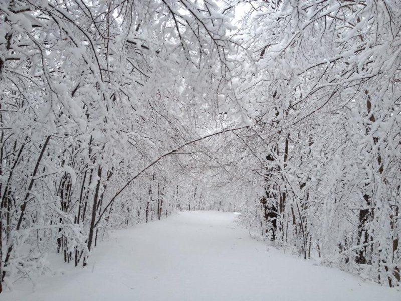 A trail at the Scenic Caves Nordic Centre