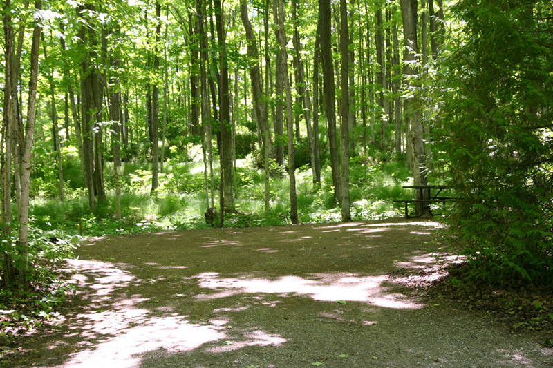 Sauble Falls Provincial Park West Campground Sites on the opposite side of the road from the river